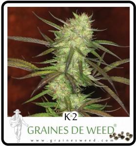 K2 - Marijuana