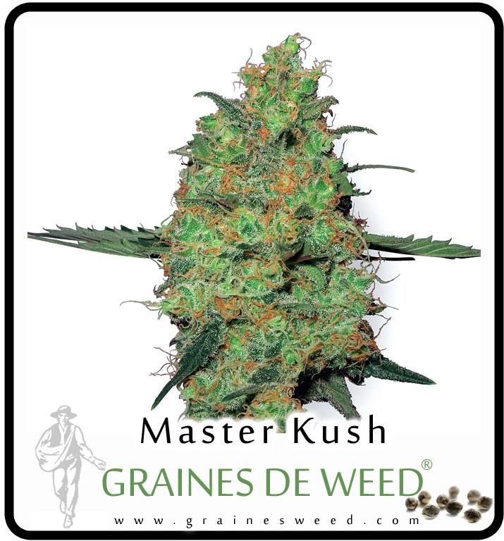 Ce weed peut être cultivée en intérieur dans des systèmes sols ou hors-sol, dans une serre ou, encore, en pleine terre, lorsque le climat est raisonnablement chaud.