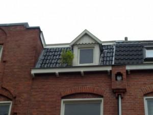 Cannabis sur le toit!