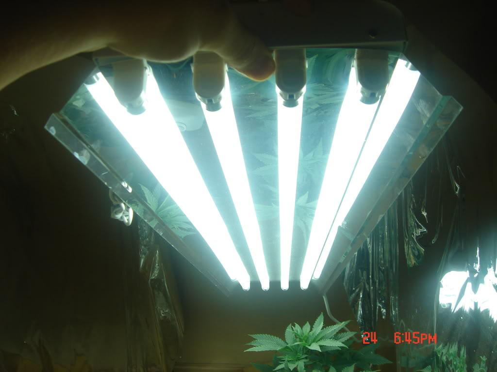 lampe pour cannabis pas cher interesting led lampes