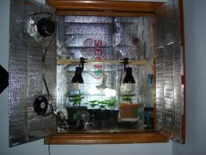 Culture de cannabis sécret dan une armoire
