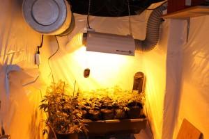 jardin-weed-interieur