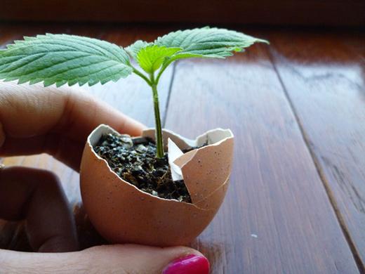 grands pots pour plantes m tures graines de weed. Black Bedroom Furniture Sets. Home Design Ideas