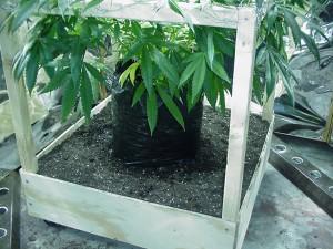 sacs de plantation pour le cannabis