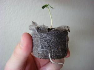 Pot pour poussen de cannabis