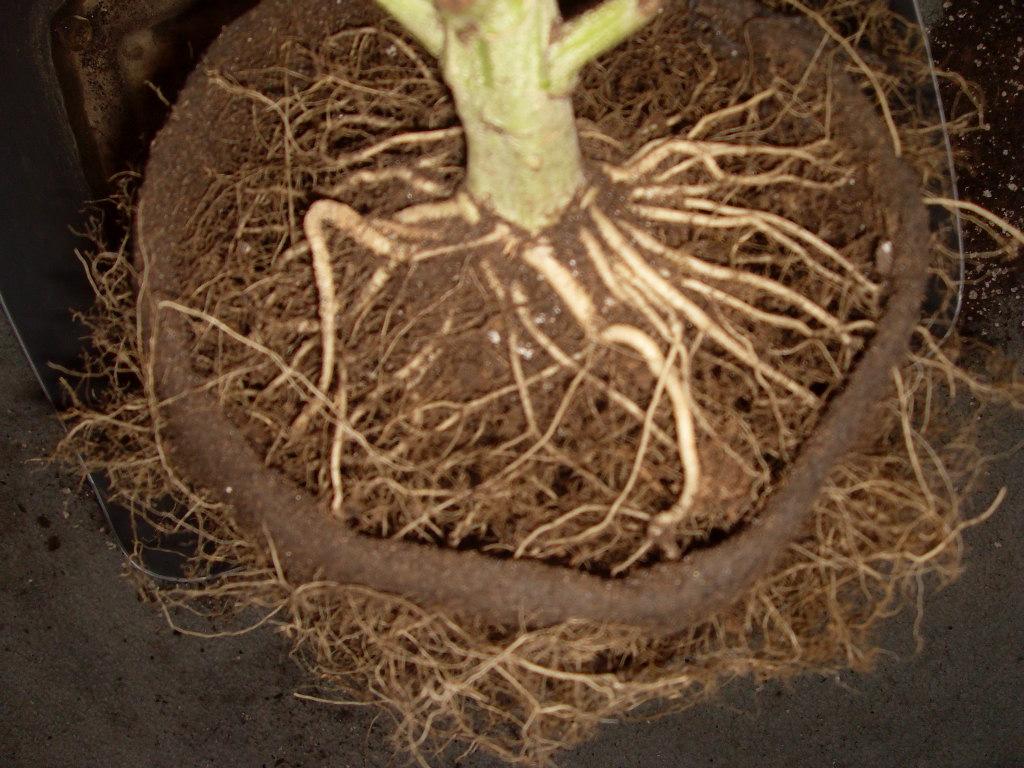 Terrains pour les cultures ext rieurs graines de weed for Culture cannabis exterieur