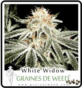 Vente de graunes de weed bon marché