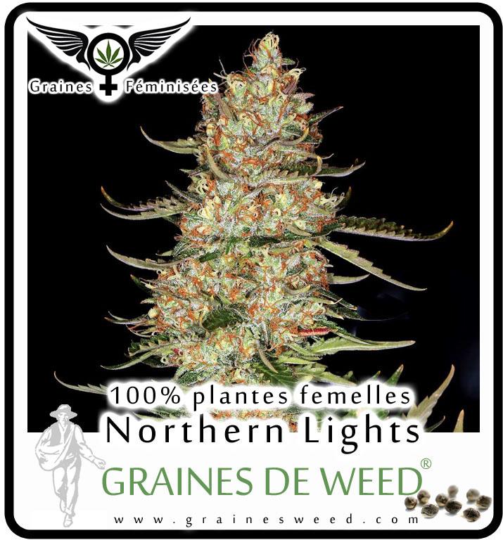 Graines de l'herbe femelles: Northern Lights