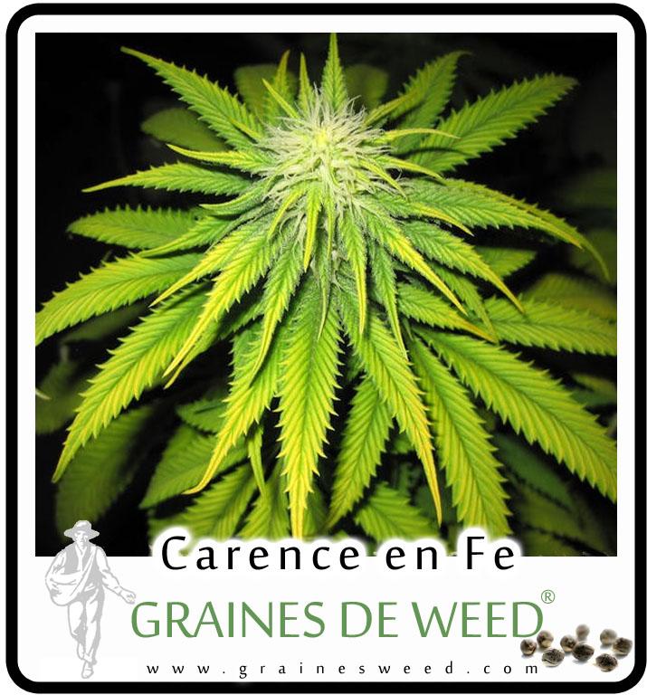carence-fer-weed1.jpg