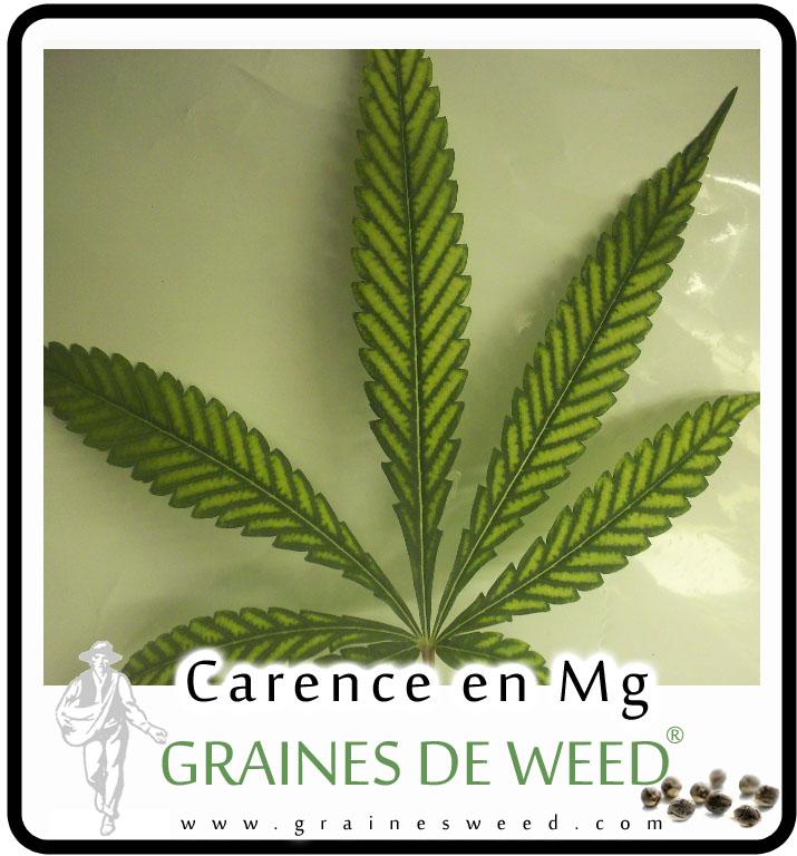 Feuille de weed avec déficiences en Magnésium