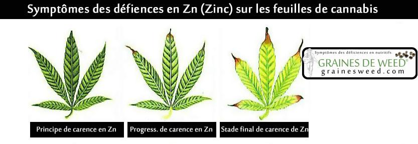 """Les têtes """"en forme de crochet"""" sont causées par un manque de Zn pendant la floraison."""