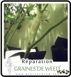 La weed facile à réparer avec des attelles et du scotch.