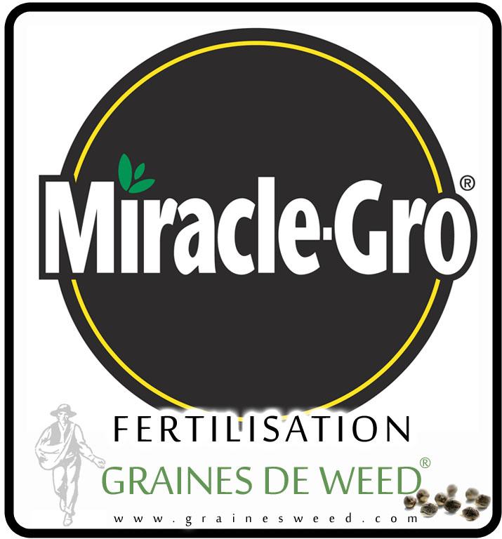 Culture du cannabis en ext rieur graines de weed for Meilleur engrais pour cannabis exterieur