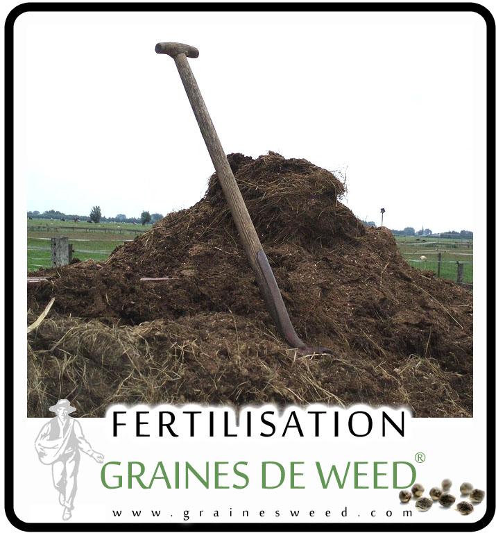 Fumier pour fertiliser ses plantes de weed