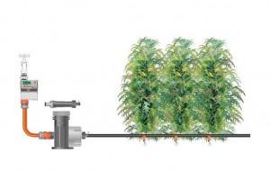 Le système à goutte à goutte pour cannabis