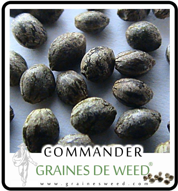 La germination de graines de cannabis graines de weed - Comment passer en floraison ...