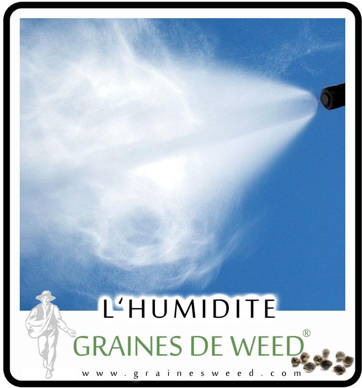 Le cannabis répond mieux quand l'humidité relative est entre 40 et 80 pour cent.