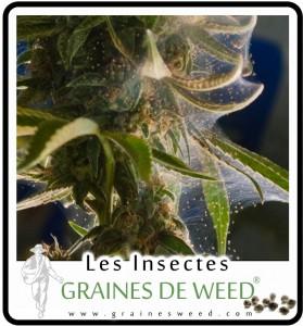 Plante trop sec, danger mites!