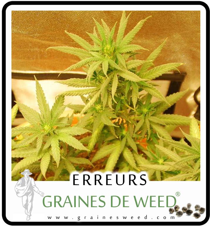 Fertiliser son cannabis graines de weed for Meilleur engrais pour cannabis exterieur