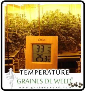 La bonne temperature pour la weed