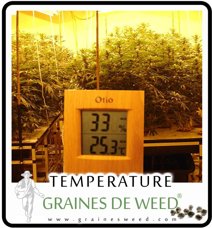 la temp rature pour la weed graines de weed