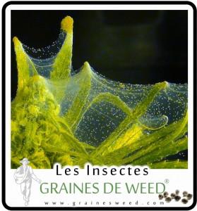 Mites: vous verrez des toiles d'araignée