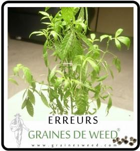 Eau graines de weed for Graine de weed exterieur