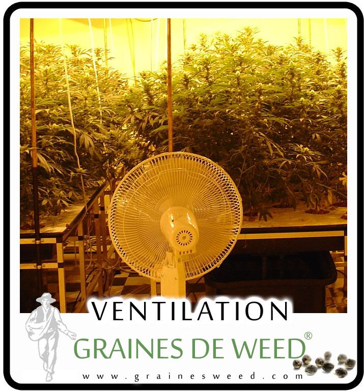 Ventilation de cannabis