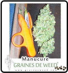 ciseaux-cannabis