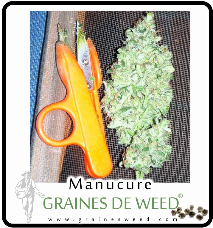 La manucure graines de weed for Graine de weed exterieur