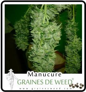 manucure-cannabis