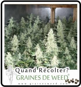 soigner ses plantes de cannabis graines de weed. Black Bedroom Furniture Sets. Home Design Ideas