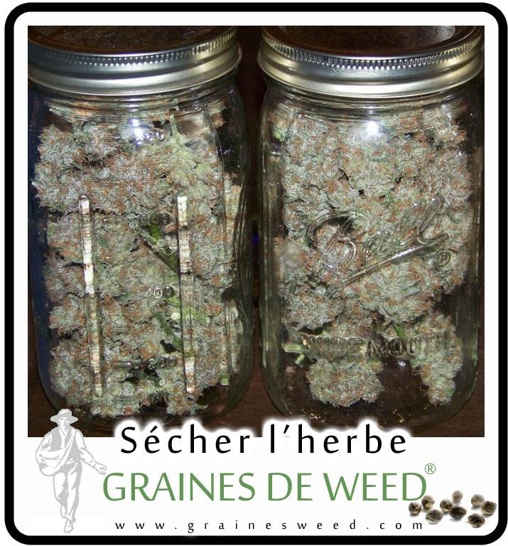 le s chage du cannabis graines de weed. Black Bedroom Furniture Sets. Home Design Ideas