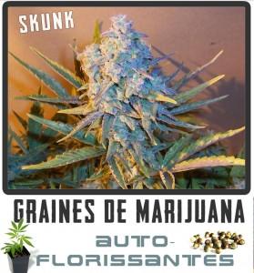 cannabis-auto-florisant