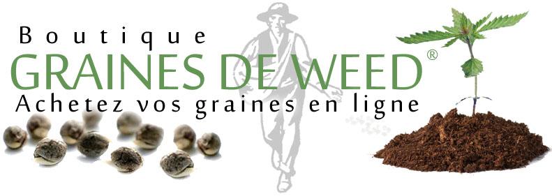 Graines de weed acheter semences de cannabis au meilleur - Acheter des graines de tabac en france ...